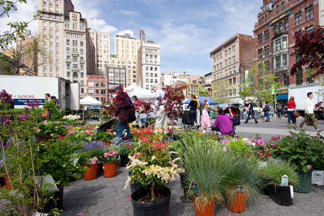 union_square_market_new_york_alleygirl